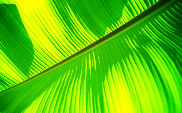Chartreuse Web 𝗥𝗚𝗕 𝗖𝗢𝗟𝗢𝗥 𝗖𝗢𝗗𝗘 7fff00